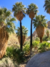 JT 49 Palms Oasis