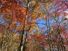 Trees ablaze in Fall